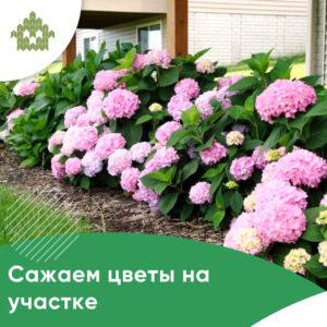 Цветы на участке | КП Варежки 3