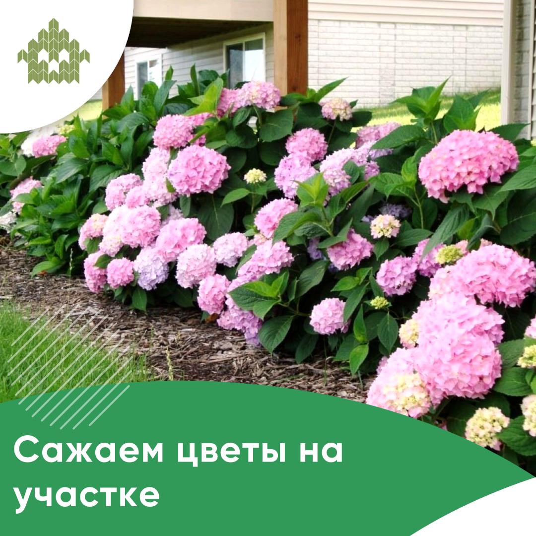 Цветы на участке   КП Варежки 3