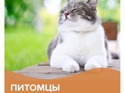 Питомцы за городом | КП Варежки 3